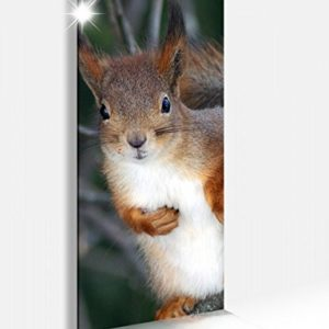 Acrylglasbild 40x100cm Eichhörnchen Tier Wald Nagetier Glasbild Bilder Acrylglas Acrylglasbilder Wandbild 14B033
