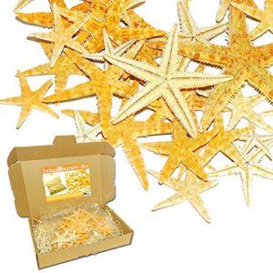 MGS SHOP SEESTERN – Mix BUNT 20 er – Set echte Seesterne Deko – Starfish im Karton zum Dekorieren & Basteln (Bunt)