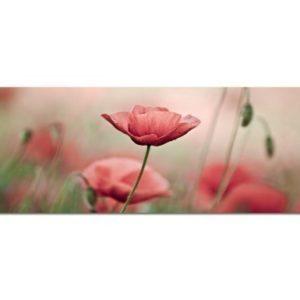 PANORAMA BILD 150x50cm (Blumen Feld Naturaufnahme Entspannung Relax) EXKLUSIVES Fotowandbild auf Leinwand und Keilrahmen Leinwandbild Fotodruck modern Zeitlos Stilvoll wie ein Gemälde