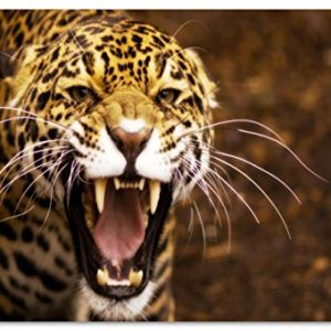 Jaguar Bild auf PVC-Plane/Banner, Hochwertiger XXL Kunstdruck als Wandbild inkl. Ösen!!